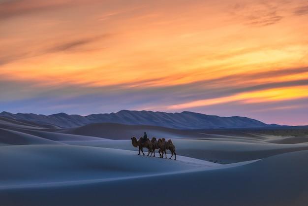Cammello che passa attraverso le dune di sabbia su alba, deserto mongolia del gobi.