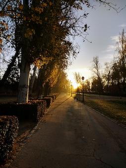Cammina attraverso molti alberi uno accanto all'altro nel parco