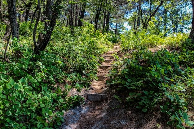 Camminare verso il mare attraverso la foresta