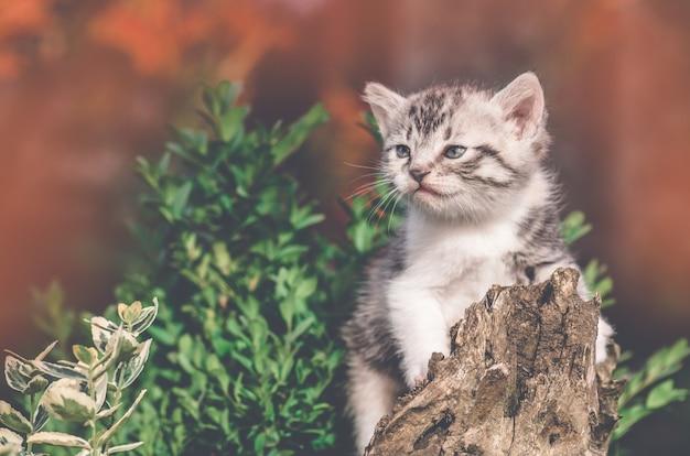 Camminata sveglia del piccolo gattino all'aperto in autunno