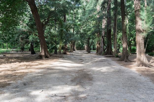 Cammini in foresta e spiaggia di sabbia in giornata di sole