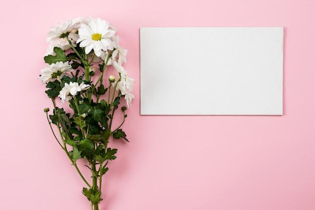 Camomiles freschi e strato bianco vuoto su fondo rosa. - copia spazio rigth