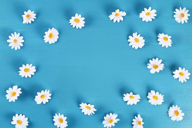 Camomilla su sfondo blu. vista dall'alto. sfondo estivo