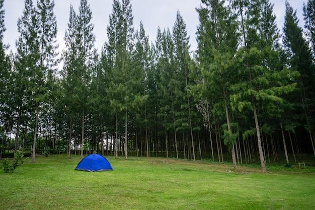 Campeggio e tenda con il fondo del pino nel parco naturale