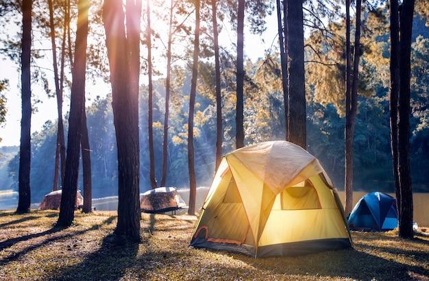 Campeggio e tenda sotto la pineta vicino al lago con una bella luce del sole al mattino