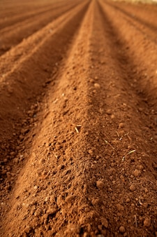 Campi agricoli arati del terreno argilloso rosso