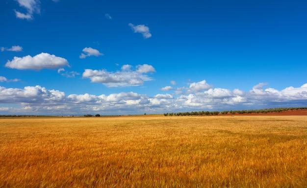 Campi di cereali della castiglia la mancha a cuenca