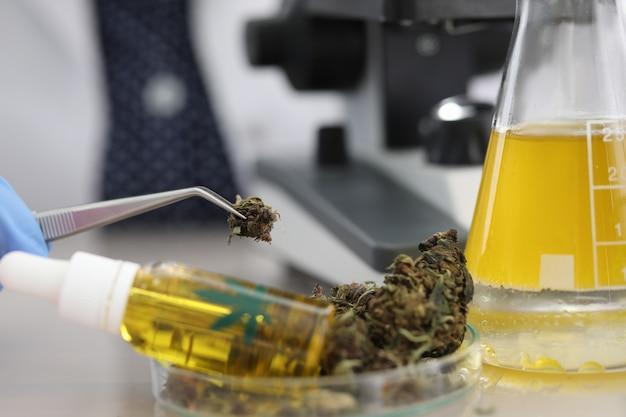 Campioni di cannabis sul tavolo in laboratorio medico