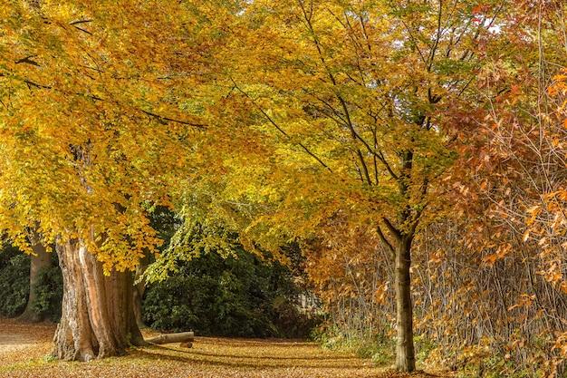 Campo ampio di alberi nel mezzo di una foresta in una giornata luminosa