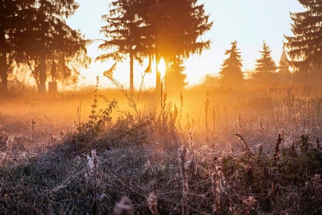 Campo con rugiada del mattino all'alba.