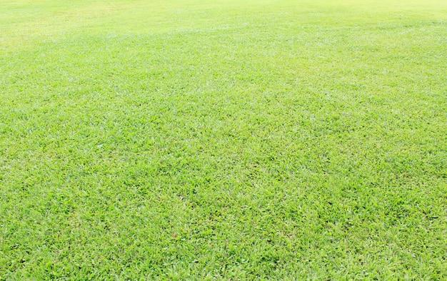 Campo d'erba