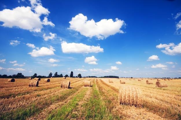Campo dell'azienda agricola