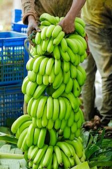 Campo di banane