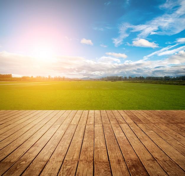 Campo di erba fresca all'aperto colorato