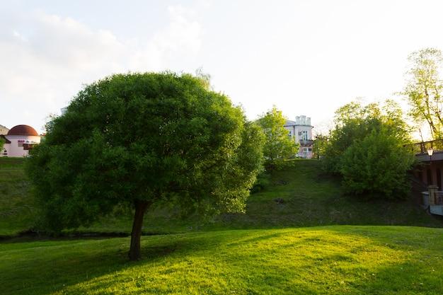 Campo di erba verde nel grande parco cittadino
