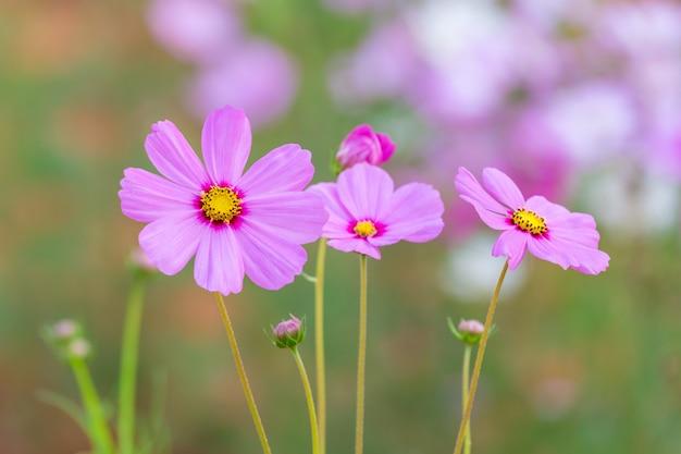 Campo di fiori dell'universo