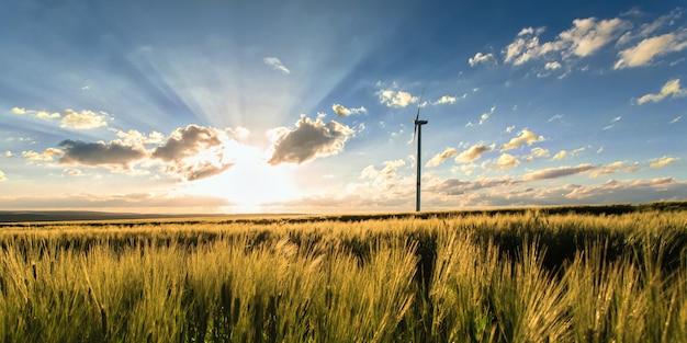 Campo di grano con mulino a vento