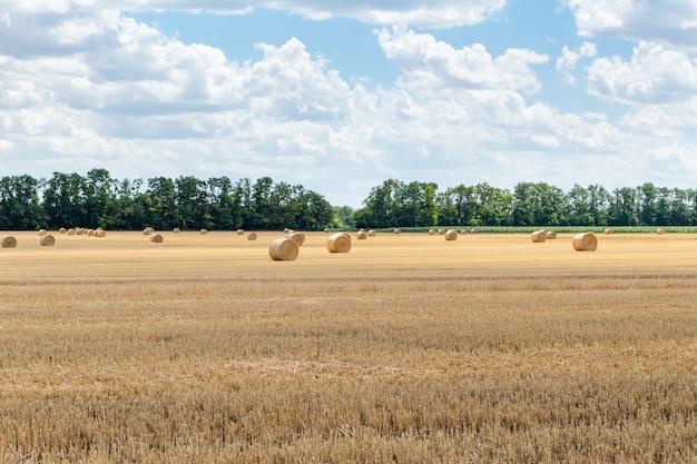 Campo di grano di segale orzo raccolto di cereali, con covoni di fieno