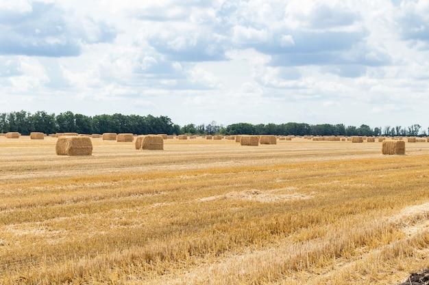 Campo di grano raccolto, con i mucchi di fieno sul cielo blu nuvoloso. agricoltura agricoltura economia rurale concetto di agronomia
