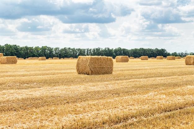 Campo di grano raccolto della segale dell'orzo del grano del cereale del grano, con i mucchi di fieno sul cielo blu nuvoloso