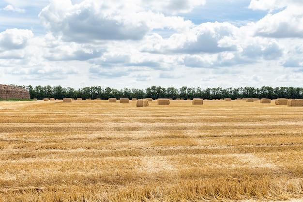Campo di grano raccolto di grano, con balle di paglia pagliai e cielo blu nuvoloso