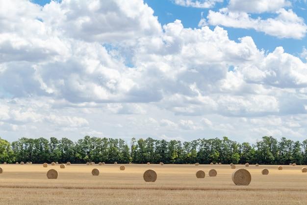 Campo di grano raccolto di grano, con balle di paglia pagliai pali di forma rettangolare