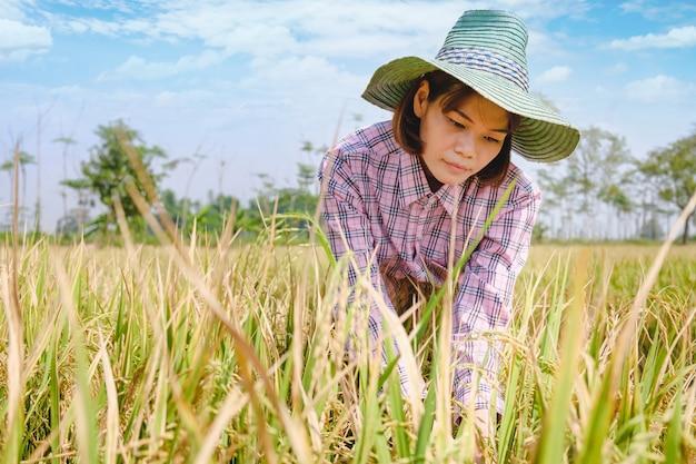 Campo di risaia felice del raccolto della donna dell'agricoltore con cielo blu