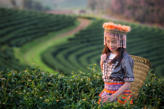 Campo di tè verde e bambino in shui fong