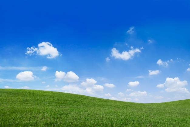 Campo e cielo blu di erba verde