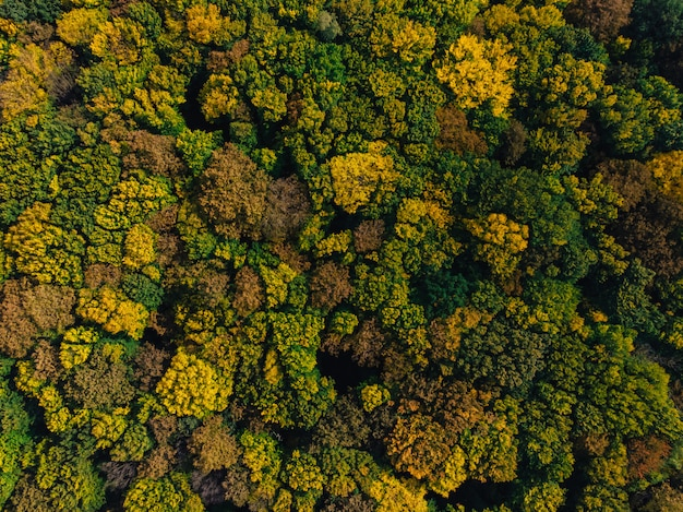 Campo e foresta aerei della campagna del fuco di autunno