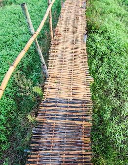 Campo e nuvole di bambù del passaggio pedonale del paesaggio di estate
