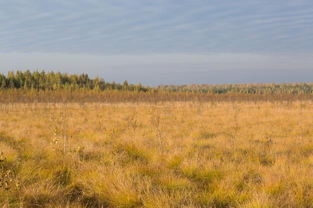 Campo giallo d'autunno presso la palude