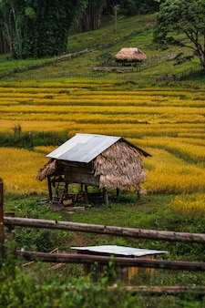 Campo in thailandia