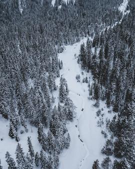Campo lungo di una strada circondata da alberi di pino con un cielo blu in inverno