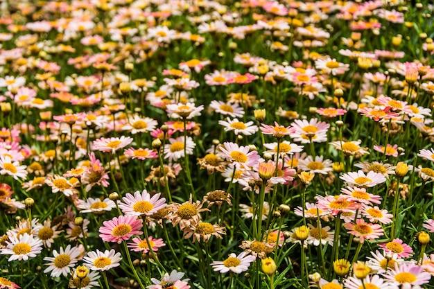 Campo pieno di fiori