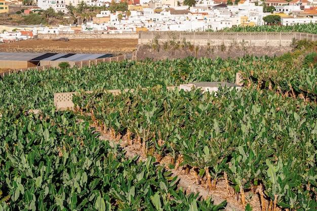 Campo tropicale con sfondo di villaggio