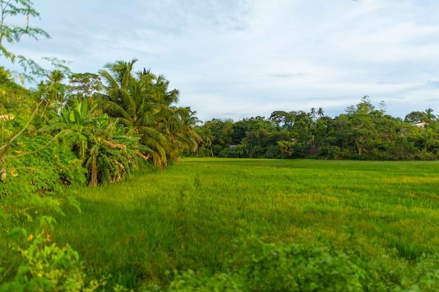 Campo verde nella giungla