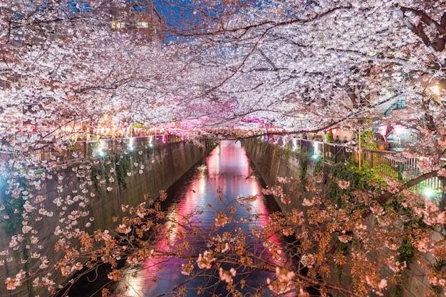 Canale di meguro foderato di fiori di ciliegio di notte a tokyo