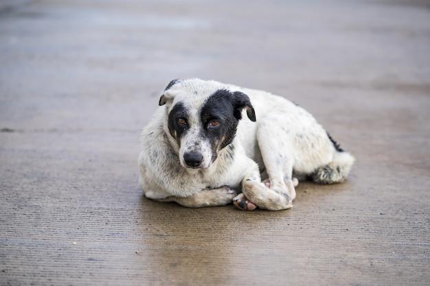 Cane accovacciato sulla strada dopo la pioggia