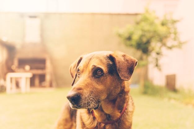 Cane adorabile che posa nel giardino