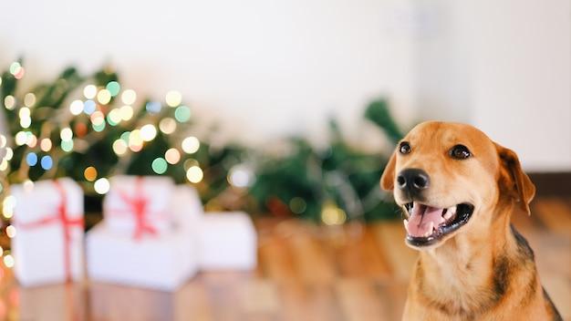 Cane adorabile con i regali che celebrano il natale a casa.