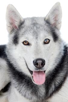 Cane adorabile una terra posteriore bianca
