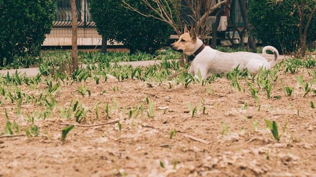 Cane adulto che cammina vicino a casa