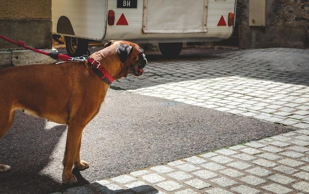 Cane al guinzaglio e una roulotte