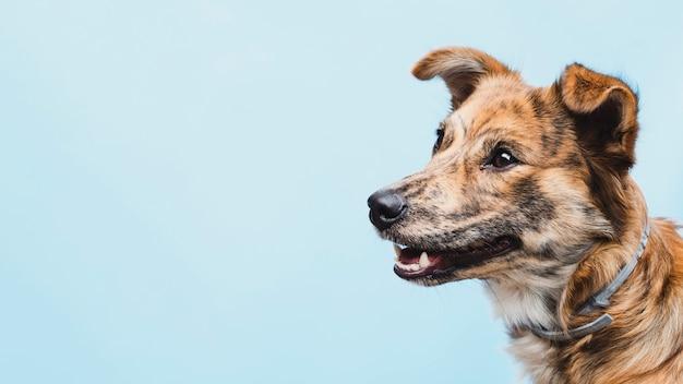 Cane amichevole con orecchie tritate copia-spazio