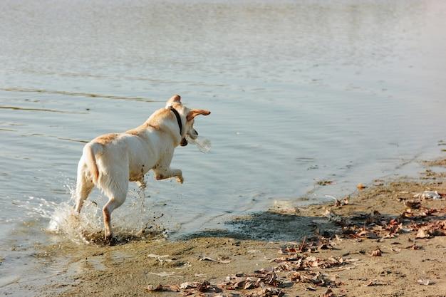 Cane bagnato che gioca con una bottiglia sulla riva sabbiosa un giorno soleggiato