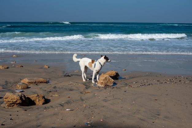 Cane bianco che attraversa una spiaggia circondata dal mare sotto un cielo azzurro e la luce del sole