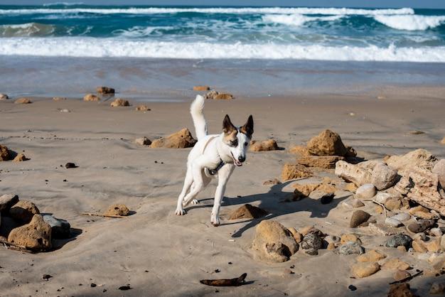 Cane bianco che cammina che attraversa la spiaggia circondata dal mare sotto la luce del sole e un cielo blu