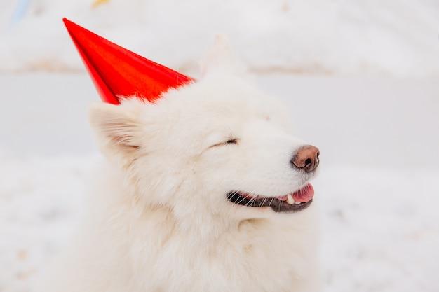 Cane bianco divertente con gli occhi chiusi in berretto rosso che si siede sulla neve nella foresta