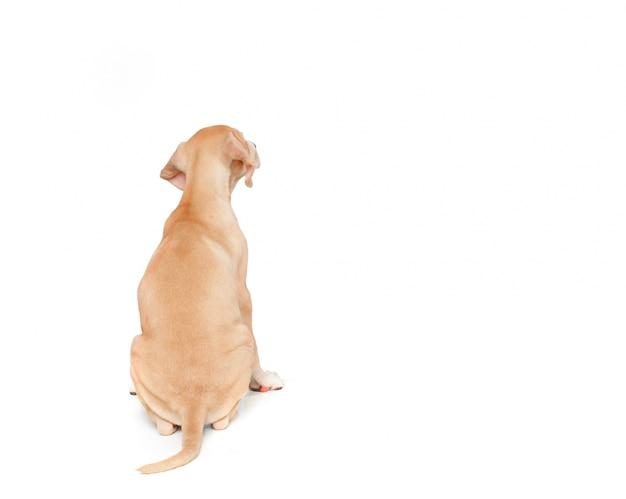 Cane bionda sulla schiena